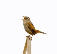 National Bird Day 2014