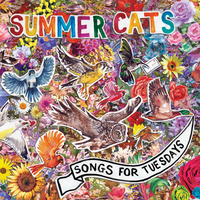 Summer Cats - Lonely Planet