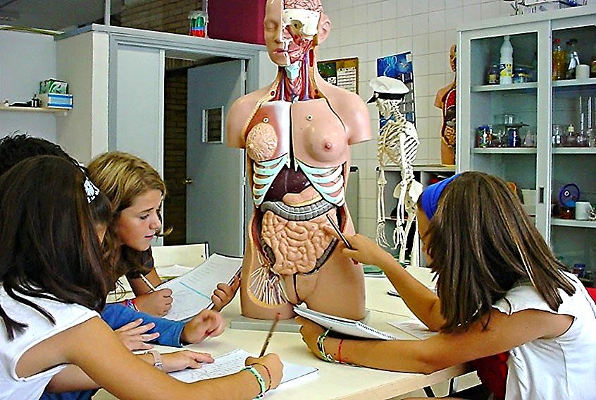 """""""Estudios de anatomía"""""""