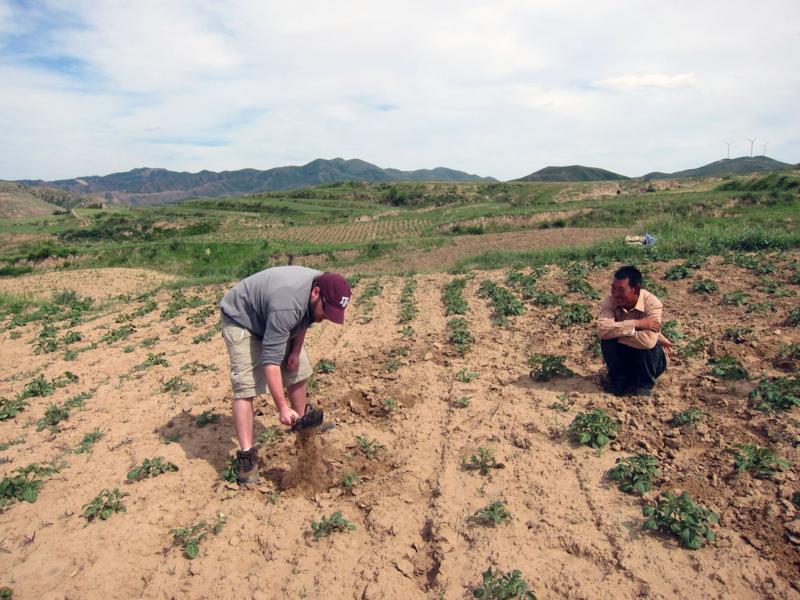 CIEE Beijing - Weeding Potatoes