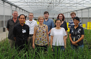 Climate ready rice Newton Prize