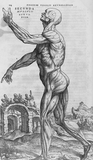 An anatomical illustration showing a flayed man from the side, facing the left, in front of a picturesque landscape with ruins. His left arm is raised and his right arm held out and downwards.