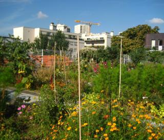 Jardin toit rue des haies