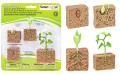 : Life Cycle of a Green Bean Plant