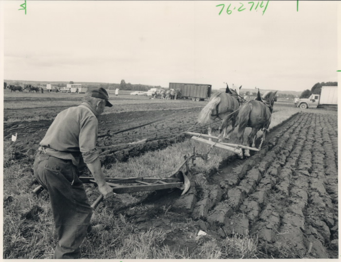 Black and white photo of older man plowing a field with two horses